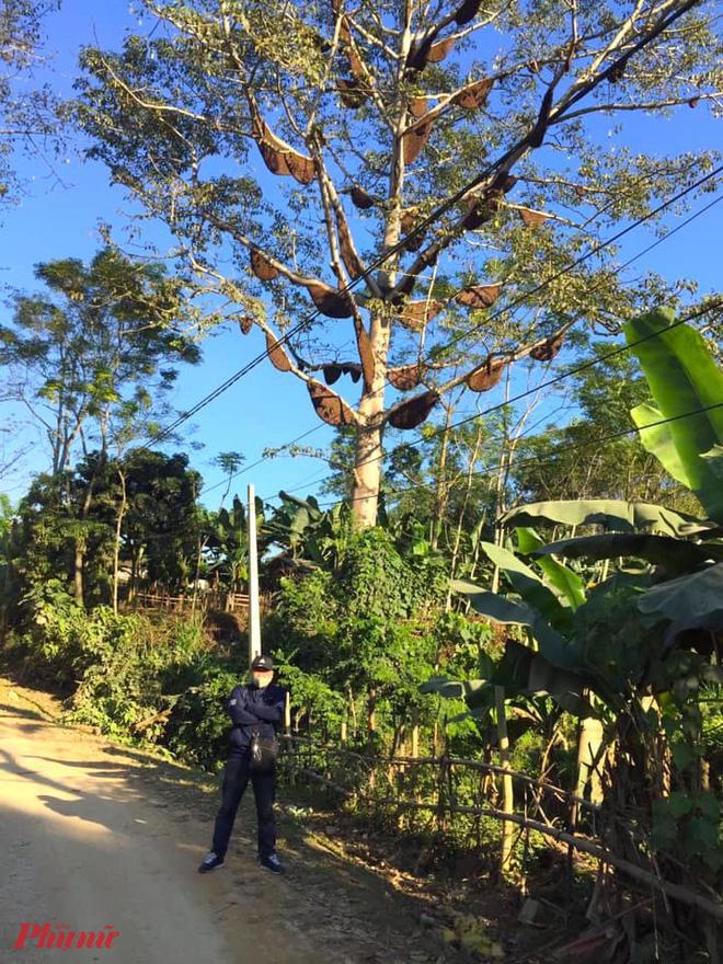 Nhiều người đi đường dừng chân chụp ảnh lưu niệm khi đi qua cây gạo đặc biệt này.