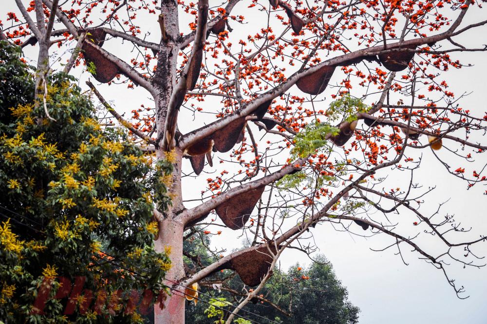 Ông Lô Ánh Hồng - Chủ tịch UBND xã Thành Sơn - cho biết, chính quyền xã này cũng thường xuyên tuyên truyền người dân cùng gia đình bà Hoàn không săn bắt, chọc phá những tổ ong để bảo tồn thiên nhiên.
