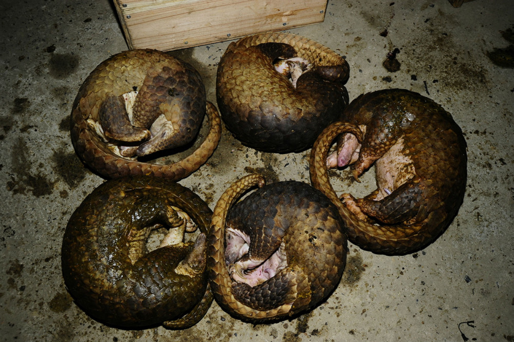 Hầu như mọi loài động vật hoang dã đều bị con người săn lùng, buôn bán, tiêu diệt