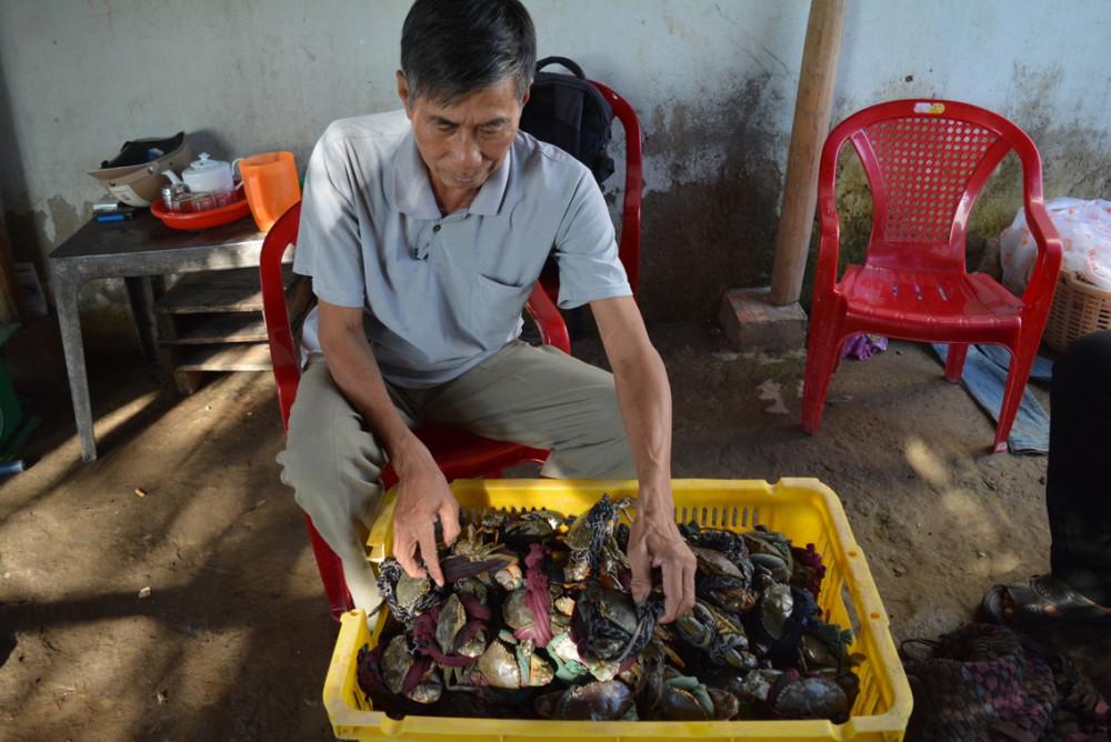 Giá cua Cà Mau đang  giảm mạnh khiến nông dân  nuôi cua điêu đứng