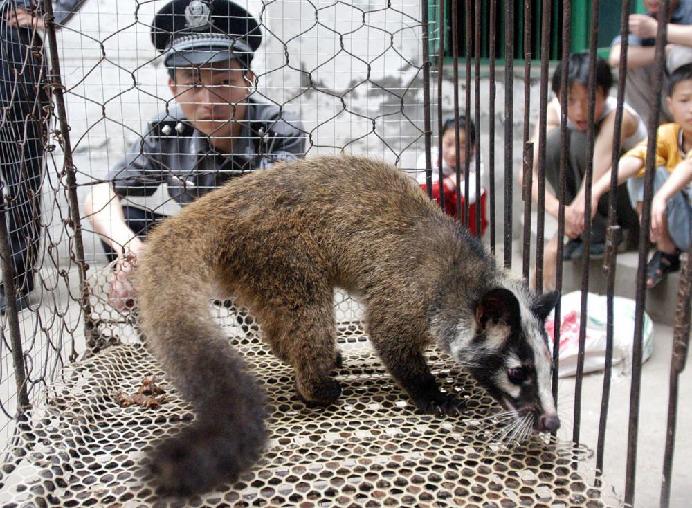 Lệnh cấm mua bán, nuôi nhốt, tiêu thụ động vật hoang dã có hiệu lực ngay từ ngày 24/2.