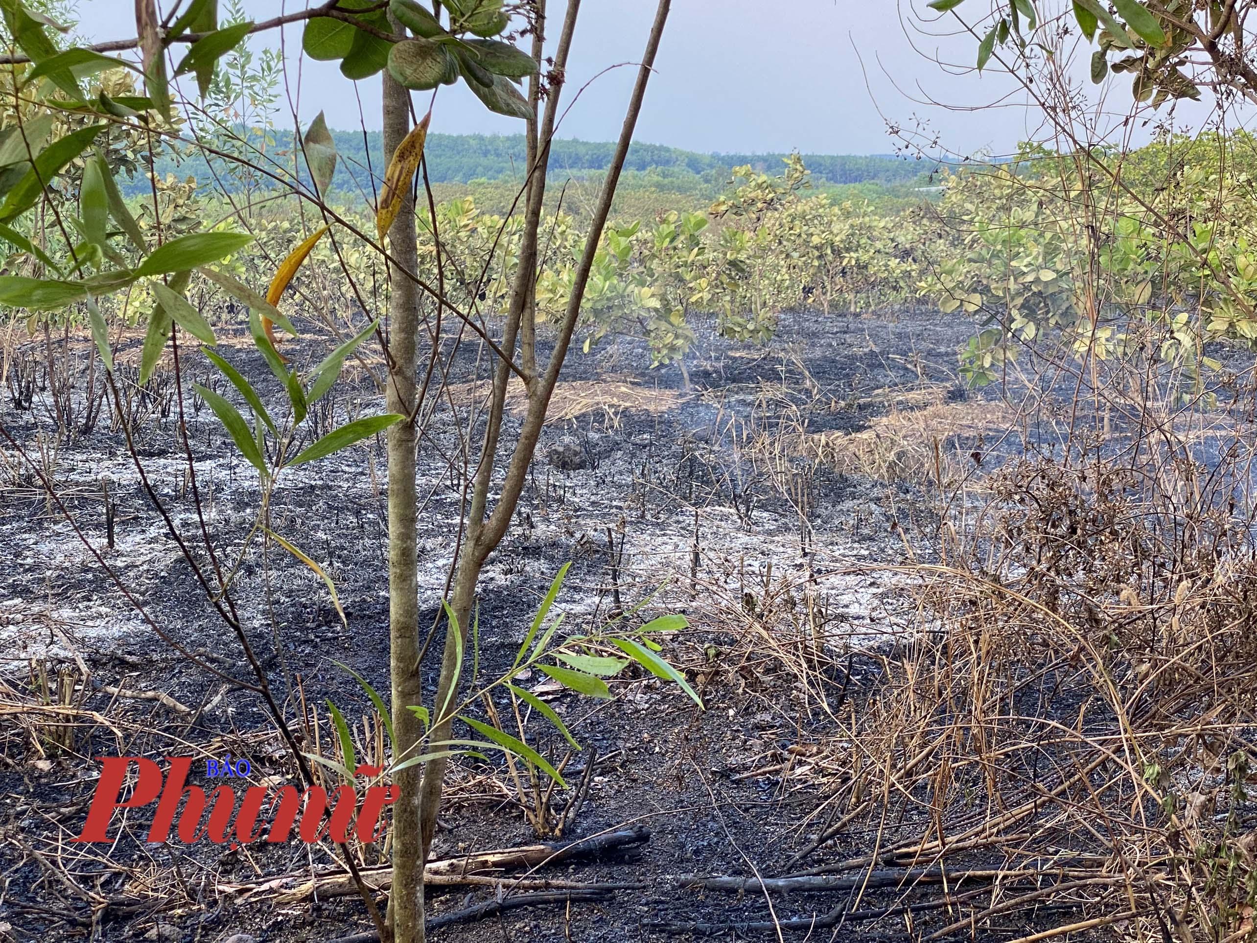 Nhiều nơi bị cháy trơ trụi