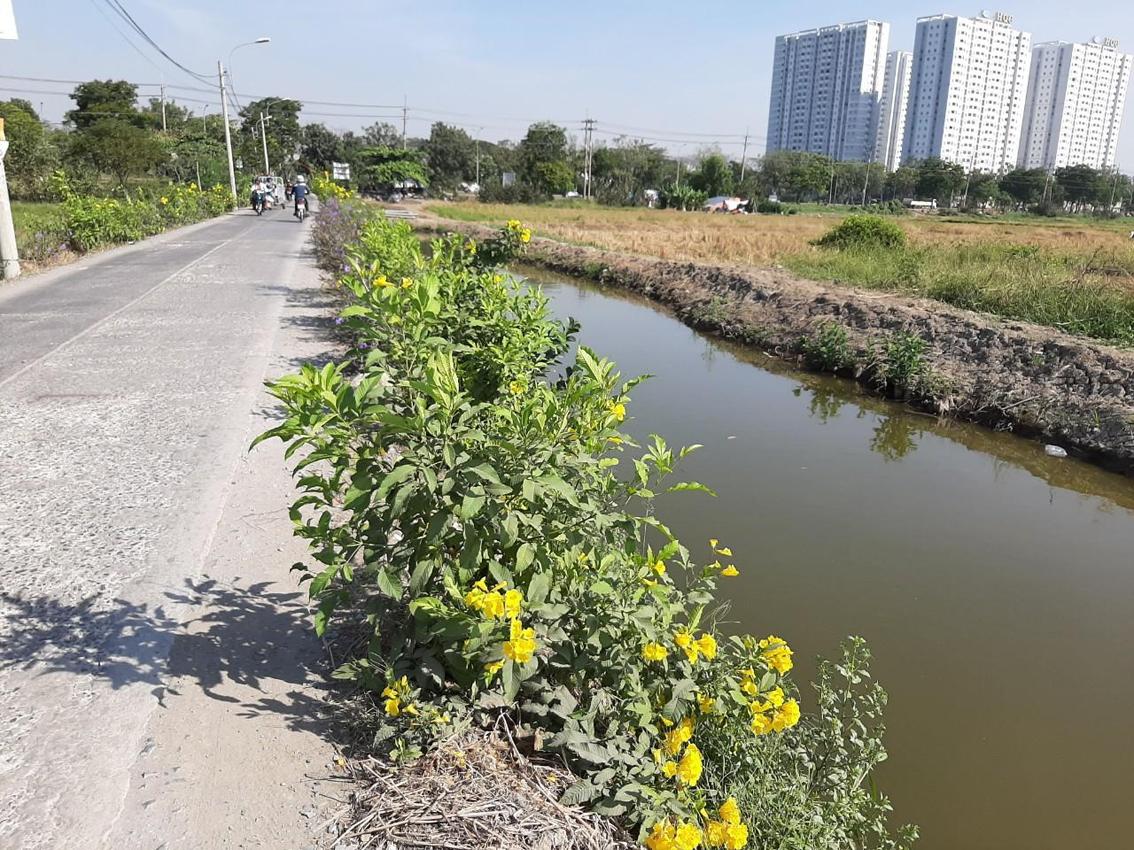 Nhờ sự phối hợp giữa Hội Phụ nữ với các ban ngành mà tuyến đường từng ô nhiễm,  xuống cấp… đã nở hoa