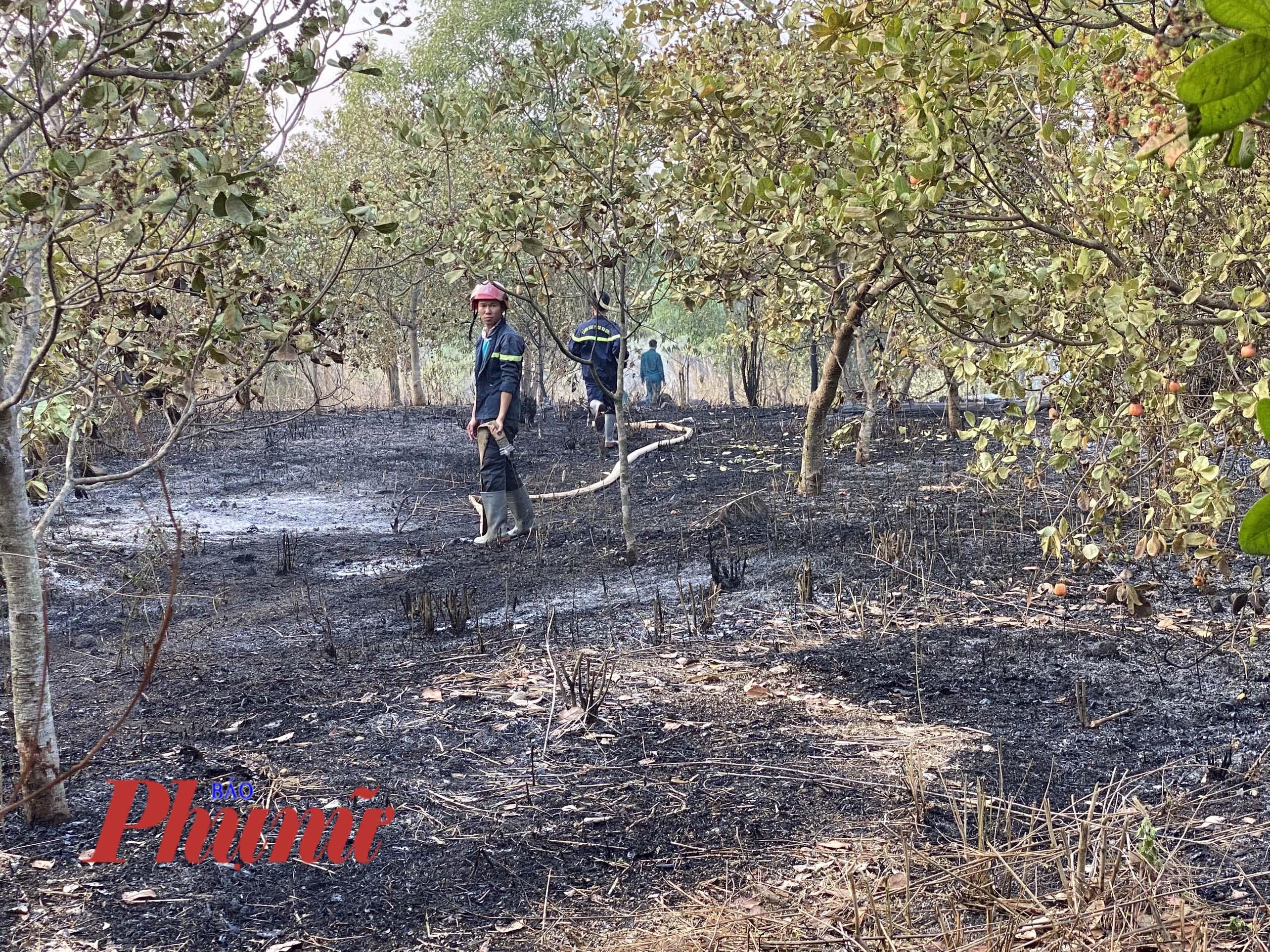 3ha điều đang cho thu hoạch bị mất trắng ngọn lửa từ quá trình dọn rẫy