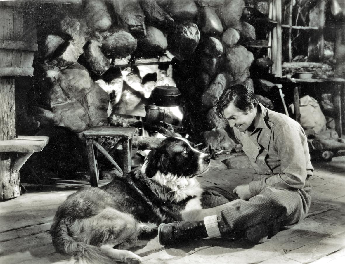Nam tài tử Clark Gable và Buck trong bản điện ảnh năm 1935 (bắt đầu quay năm 1934)