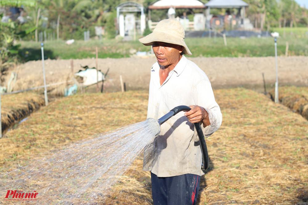 Thiếu nước ngọt khiến việc sản xuất nông nghiệp của người dân bị ảnh hưởng nặng nề.