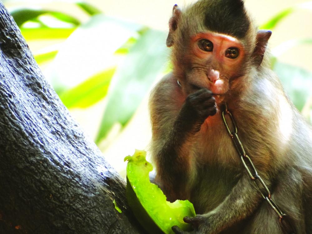 Tình trạng nuôi nhốt động vật hoang dã vẫn còn xảy ra tại khá nhiều hộ gia đình ở TPHCM - Ảnh: HOÀNG NHIÊN
