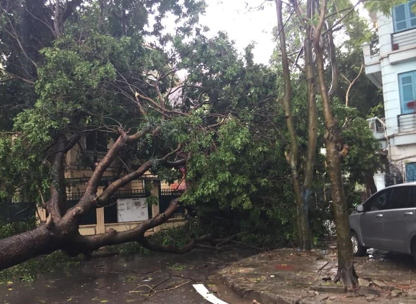Cơn mưa lớn ngoài gây ra ngập úng, gây khó khăn cho việc đi lại của người dân mà còn kèm theo giông, lốckhiến nhiều cây to bật gốc.