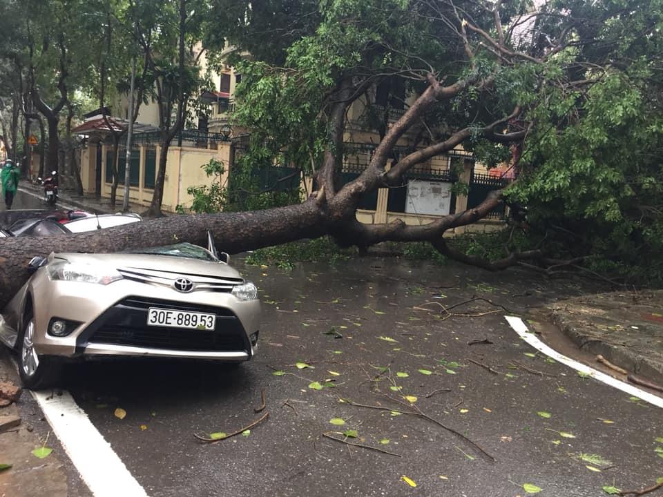 Chiếc xe xui xẻo tại khu vực Định Công (Hoàng Mai) bị bẹp rúm sau khi cây to đè trúng.