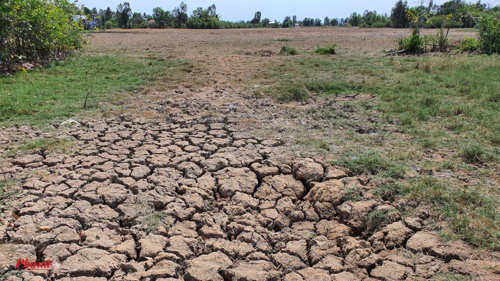 Ruộng đồng nứt nẻ, kênh rạch cạn nước là hiện trạng mà huyện Cần Giuộc đang hứng chịu