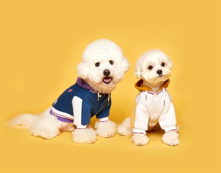 Ngành thời trang may mặc cho chó phát triển tại Hàn Quốc.