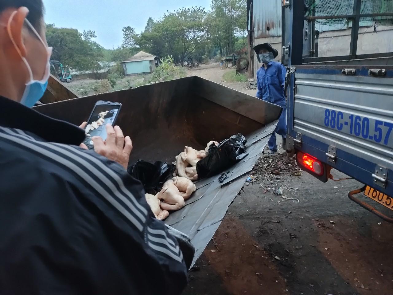 Lực lượng chức năng tiến hành tiêu hủy số thịt vịt không đảm bảo vệ sinh thú ý