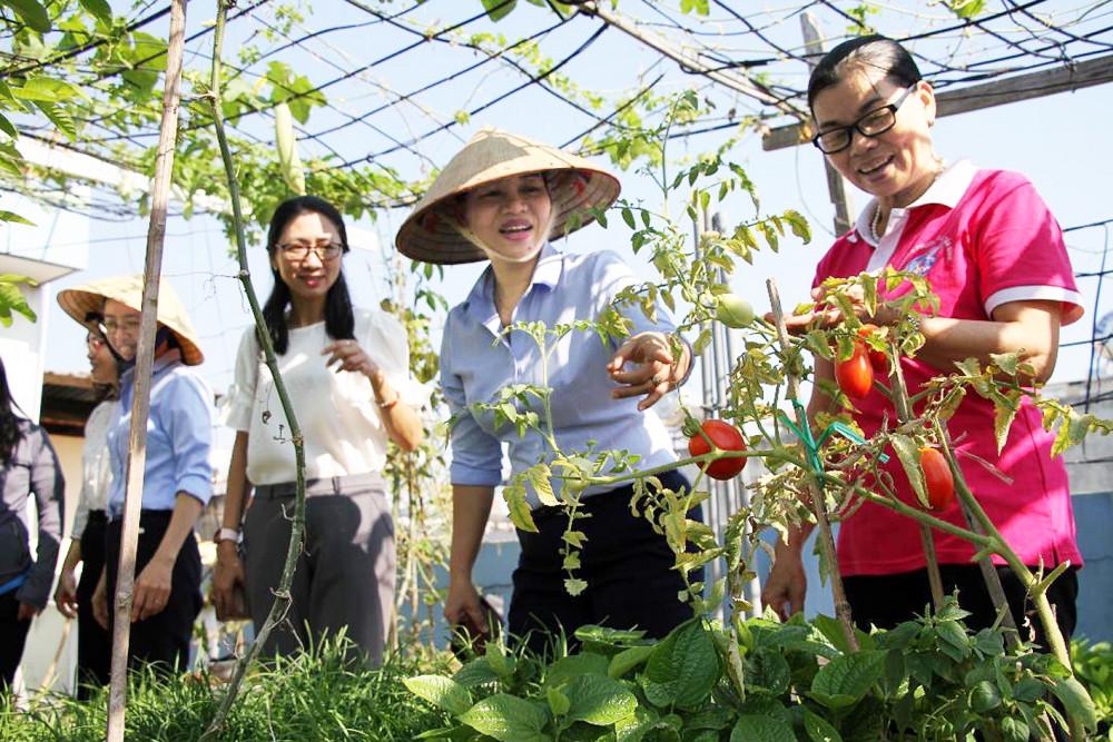 Đoàn cán bộ Hội LHPN đi khảo sát vườn rau sạch tại P.15, Q.Tân Bình
