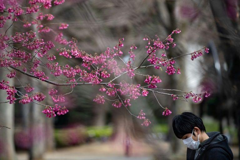 Tính đến sáng 17/3, tại Nhật Bản có 827 trường hợp nhiễm SARS-CoV-2, khiến 27 người tử vong. Đây cũng là một trong những quốc gia có số người mắc dịch viêm phổi khá cao của thế giới. Điều này khiến
