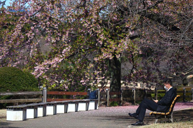 Một người đàn ông ngồi dưới tán hoa anh đào trong công viên quốc gia Shinjuku Gyoen (Tokyo) vào ngày 11/3. Năm nay, chính quyền Chính quyền Tokyo cũng kêu gọi người dân hạn chế tụ tập và tổ chức các bữa tiệc hanami - ngắm hoa anh đào và ăn uống cùng người thân và bạn bè tại các công viên trong thành phố