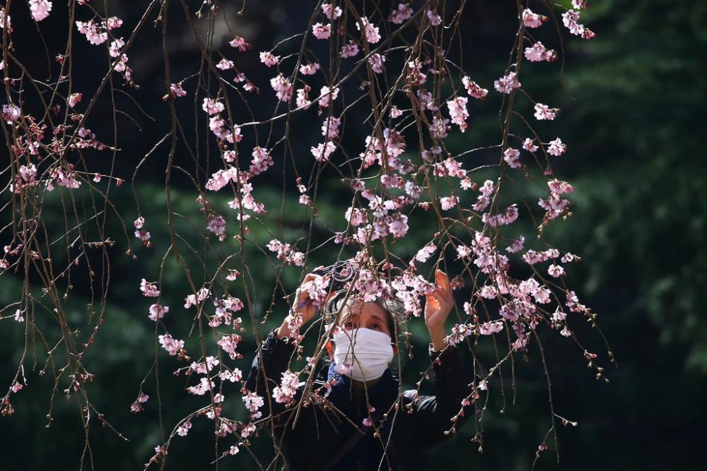 Sau một cuộc gặp với Thủ tướng Shinzo Abe, bà Yuriko Koike, Thị trưởng Tokyo cho biết người dân thủ đô vẫn được phép ngắm hoa nhưng hạn chế tụ tập đông người, chú ý bảo vệ sức khoẻ.