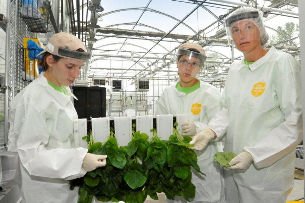 Midicago là công ty tiên phong của Canada trong việc sản xuất các chế phẩm sinh học từ thực vật.