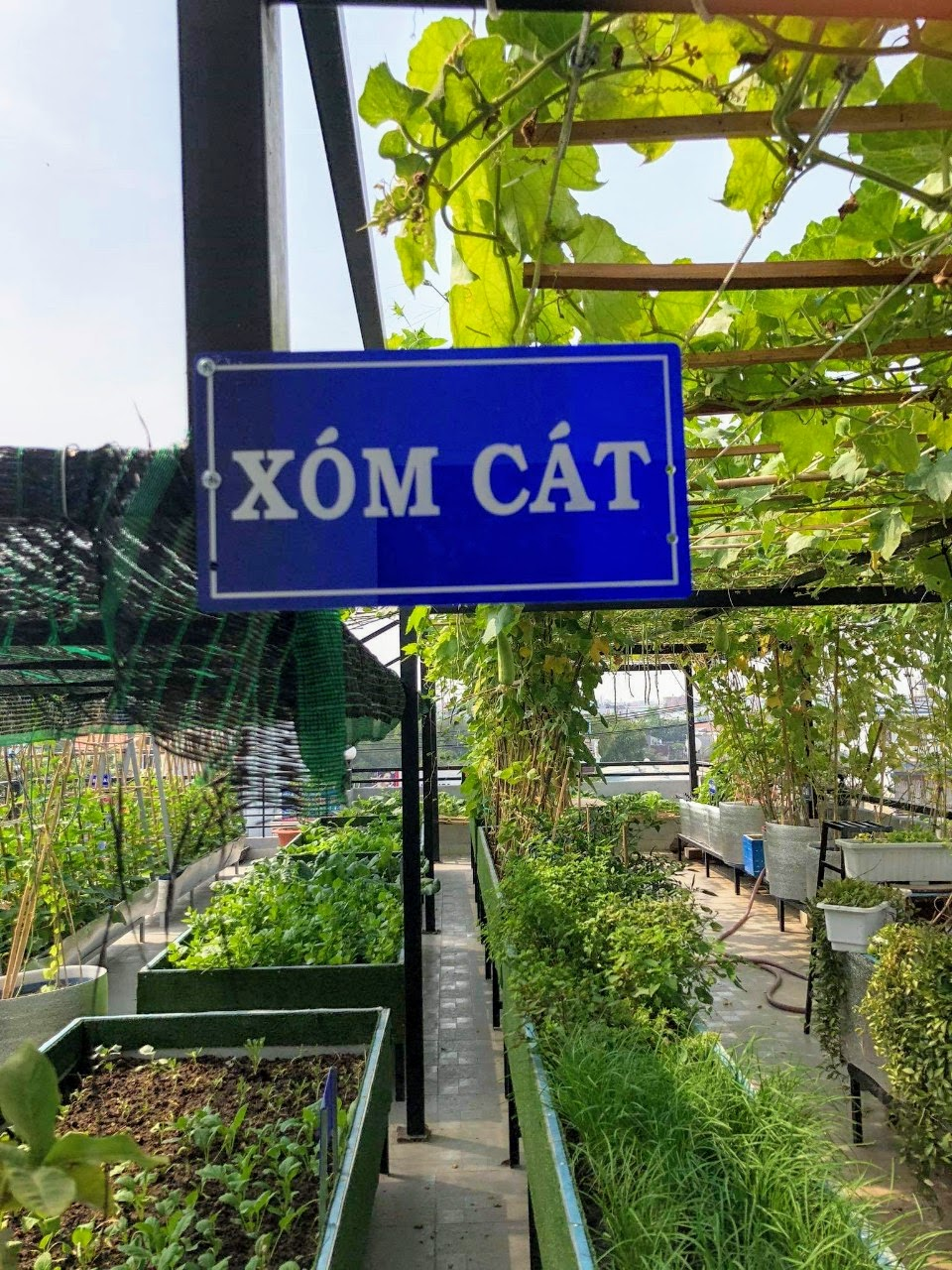 Chuyện người dân sinh sống tại TPHCM trưng dụng sân thượng, ban công làm những mảnh vườn trồng rau, cây cối,… không mới mẻ. Tuy nhiên, một sân vườn rộng toạ lạc lại được gắn cả bảng tên y như tên đường ở làng quê Bắc Bộ thì quả là mới lạ.