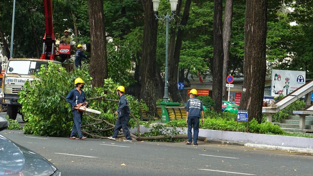 Theo Công ty Công viên Cây xanh, năm nay nhiều cây dầu ra hoa - quả nhiều gây nặng tàn nên công tác cắt tàn mé nhánh đươcj thực hiện sớm để ngăn cây ngã, gãy gây nguy hiểm cho người đi đường. Ảnh: H.N