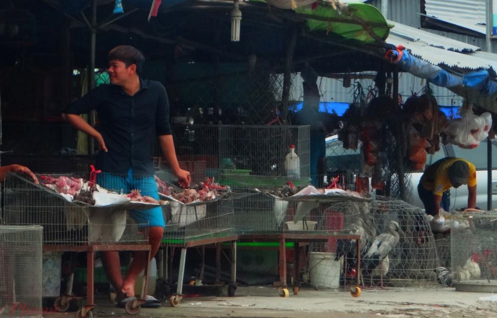 Chợ nông sản Thạnh Hóa buôn bán đủ các loại động vật hoang dã một cách công khai kéo dài nhiều năm gây bức xúc dư luận nhưng đến nay vẫn chưa được dẹp bỏ. Ảnh: H.N
