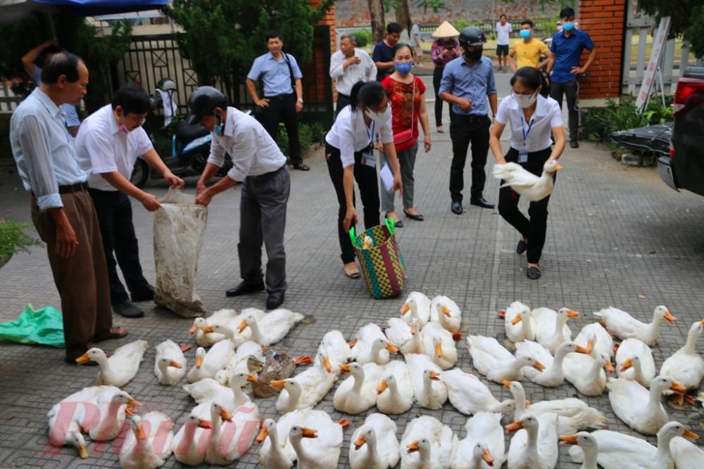 Thông qua Hội Phụ Nữ, cán bộ mặt trận  phường, tổ dân phố số vịt này được giao tận tay cho các bà con hộ nghèo, cận  nghèo thuộc khu vực phường Thuận Thành, Thuận Lộc, Phú Bình (TP. Huế)