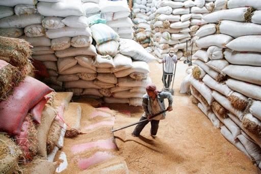 Cách đây ít ngày, Cục Trồng trọt (Bộ NN-PT-NT) nhận định, năm nay Việt Nam đủ khả năng xuất khẩu trên 6 triệu tấn gạo