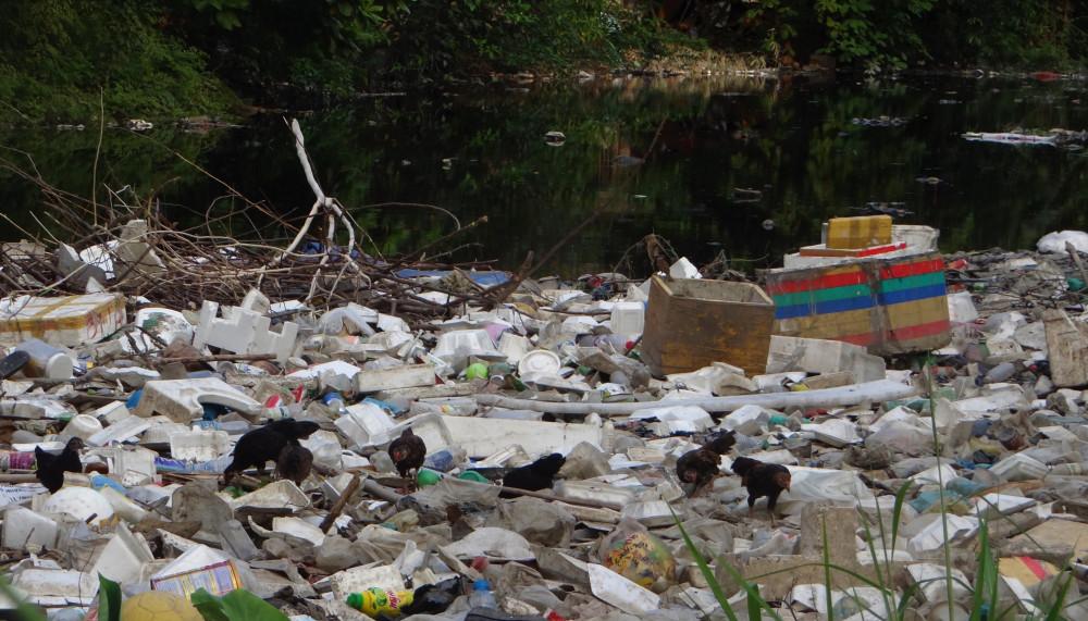 Rác trên kênh nhiều đến nổi chó, gà có thể đi lại bên trên bới tìm thức ăn, tăng nguy cơ lây nhiễm dịch bệnh.