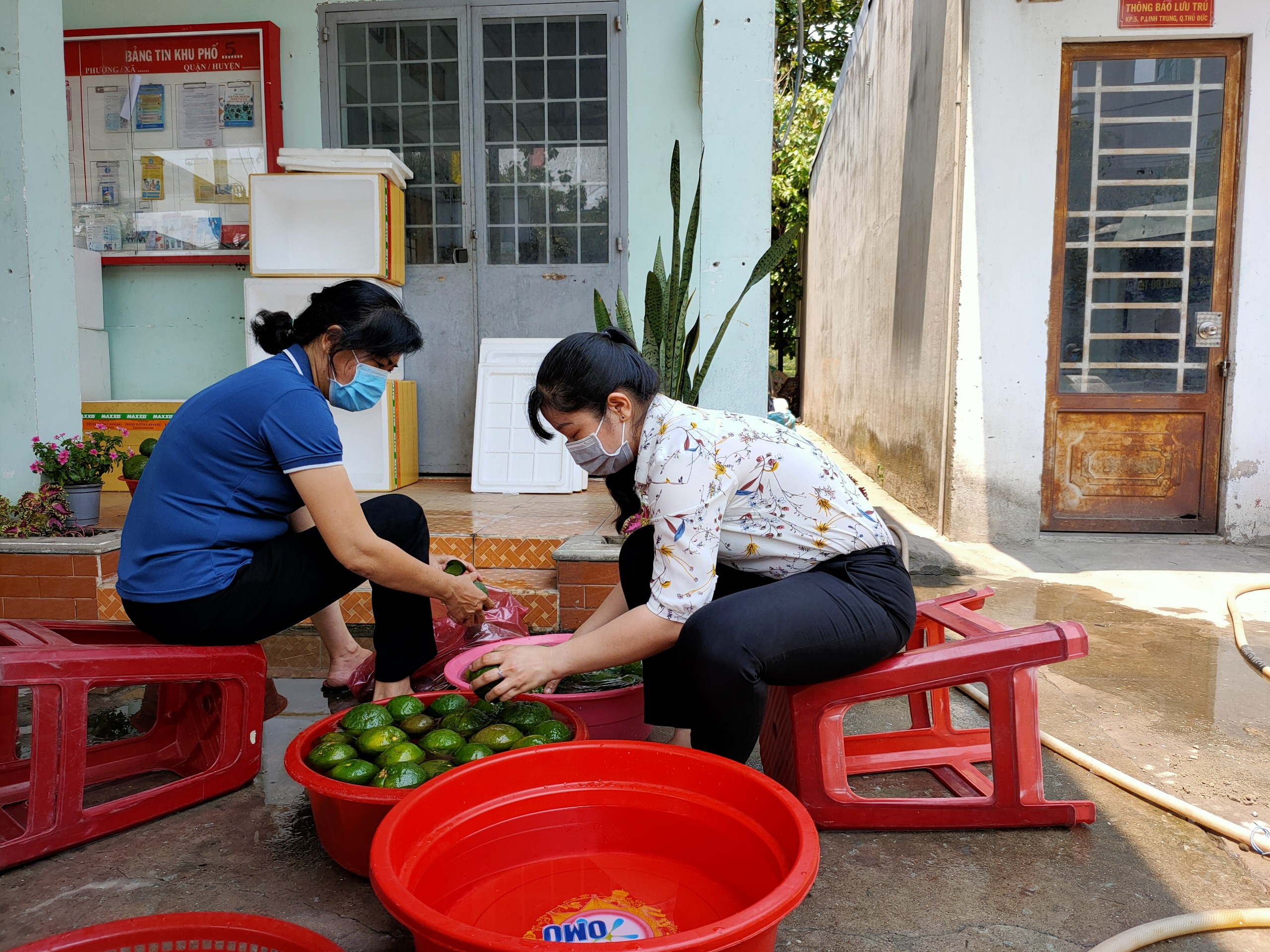 Cùng nhau chuẩn bị cam tươi vắt lấy nước gửi qua khu cách ly tập trung ký túc xá ĐH Quốc gia TP.HCM.