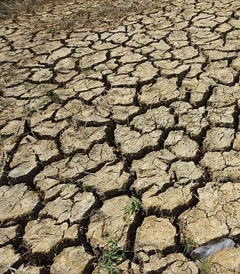 Hạn mặn khiến những cánh đồng lúa trù phú tại ĐBSCL trở nên khô cằn