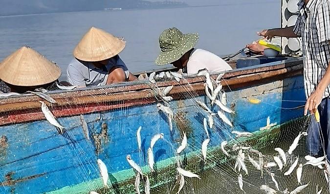 Ngư dân xã Lộc Vĩnh thu hoạch cá trích trước khi được yêu cầu tạm ngừng đánh bắt