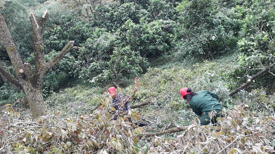 Việc làm vườn cũng được các con của tiến sĩ Hùng nhiệt tình tham gia