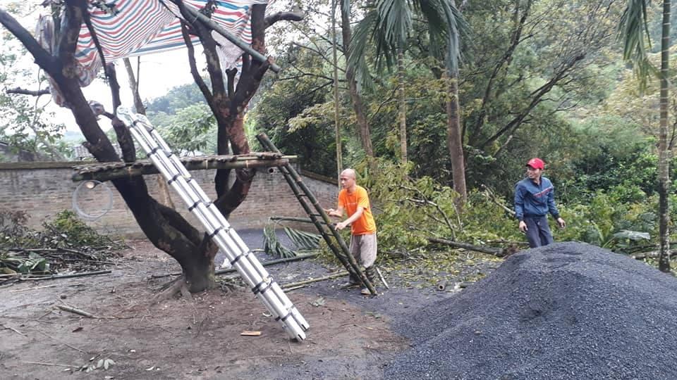 Ông Nguyễn Mạnh Hùng chọn một cái cây để làm ngôi nhà cây