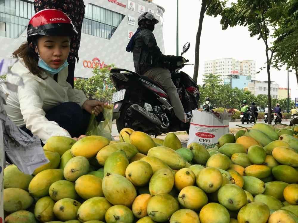 Theo đó, tại mỗi điểm bán có hơn 3 loại xoài tuỳ kích thước trái to hay nhỏ sẽ có những mức giá khác nhau đắt nhất là loại 25.000 đồng/kg và rẻ nhất là 10.000 đồng/kg, có nơi bán 2 kg là 15.000 đồng.
