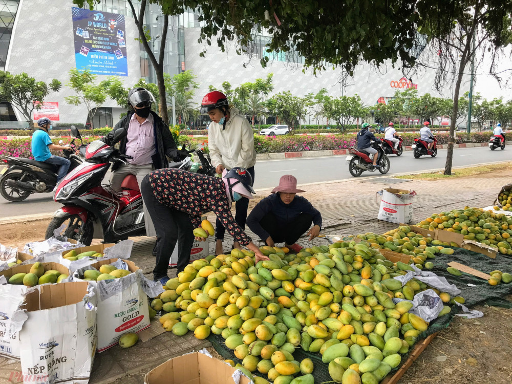 Theo người bán tại đường Phạm Văn Đồng, nguồn xoài chủ yếu lấy từ các nhà vườn tại Đồng Nai sau đó được vận chuyển về bán tại TPHCM, do đang vào chín vụ, cộng thêm thời điểm dịch bệnh COVID-19 nên hàng không xuất được đi nước ngoài nên mới có mức giá rẻ như hiện nay.