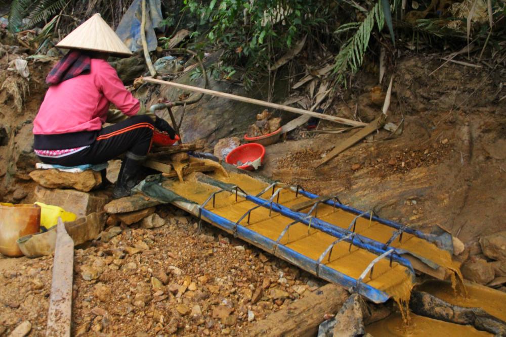 Sau khi phân loại, quặng sẽ được đưa về nơi lắng, lọc và tách vàng. Nơi này được đặt ở sâu giữa rừng keo gần đó.