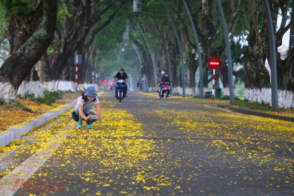 Nhiều người tranh thủ thời gian đi thể dục buổi sáng sớm để ghi lại những khoảnh tuyệt đẹp của hoa điệp vàng