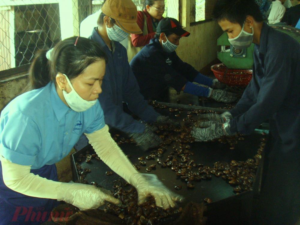 Các nhóm ngành nhập khẩu nguyên liệu về gia công bị ảnh hưởng cả đầu vào lẫn đầu ra.