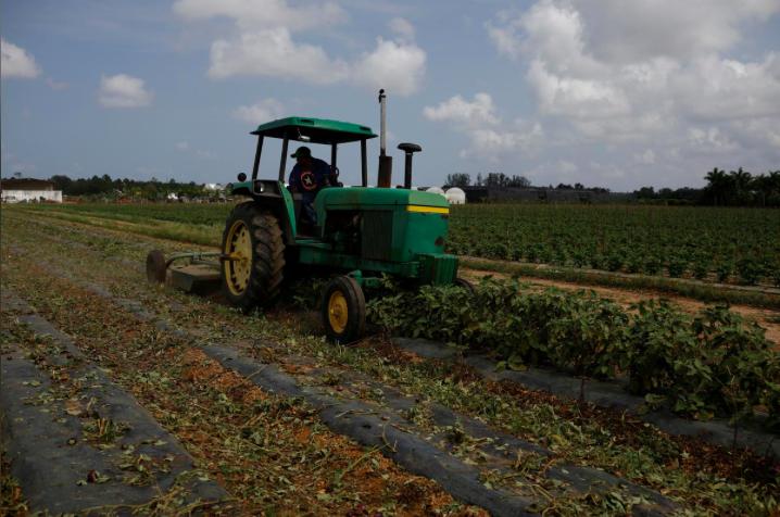 Nền nông nghiệp Mỹ đang hứng chiu nhiều thiệt hại do dịch bệnh gây ra