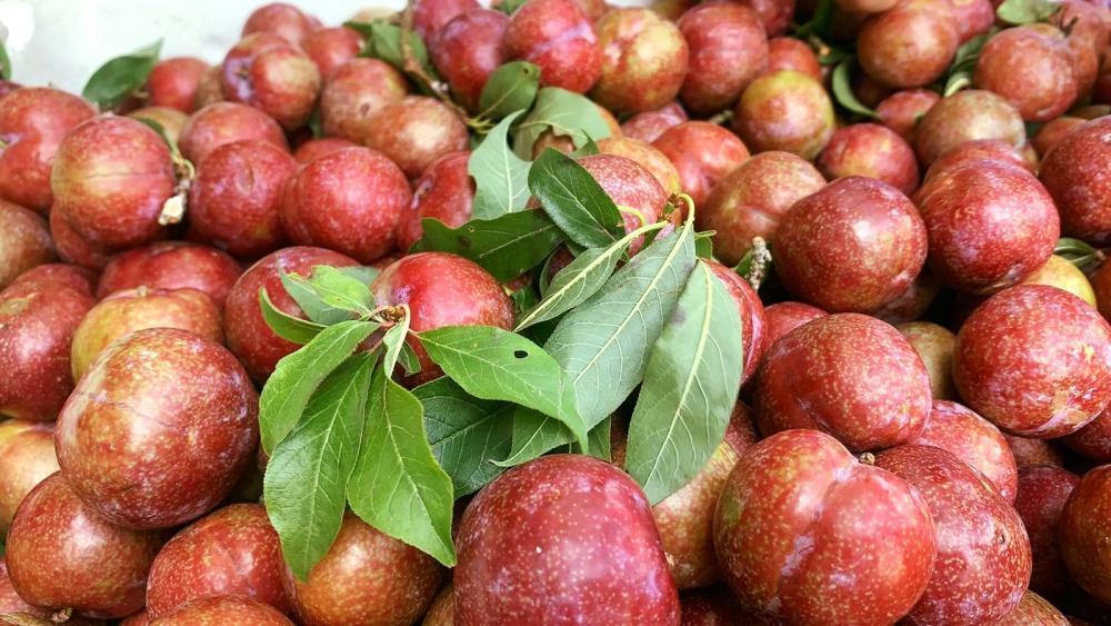Nhiều shop trái cây bán loại mận Hà Nội với mức giá khá cao, có nơi hơn 250.000 đồng/kg.