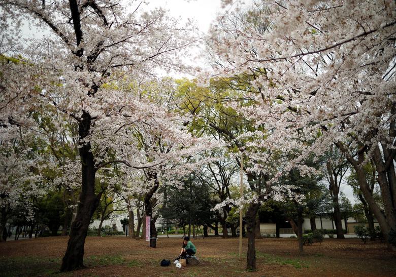 Cặp vợ chồng người Nhật ngồi thưởng lãm hoa anh đào trong không gian vắng lặng. Thường năm, họ sẽ tụ họp cùng bạn bè, gia đình để tham dự lễ hội này, nhưng năm nay do dịch bệnh nên không thể tiến hành.
