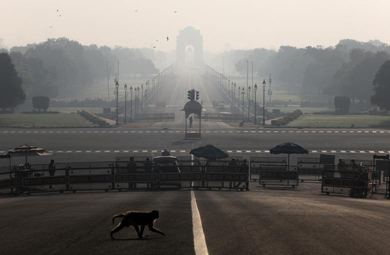 Một con khỉ băng qua đường gần Dinh Tổng thống Ấn Độ vào cuối tháng 3 khi đất nước thực hiện lệnh phong toả.