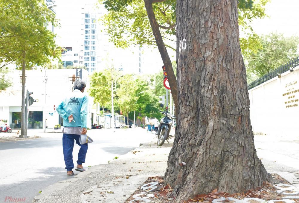 Cây vấp trên đường Nguyễn Đình Chiểu có đường kính hơn 50 cm, tuổi thọ tương đương 80-90 năm. Ảnh chụp ngày 22/4/2020. Ảnh: H. Nhiên.