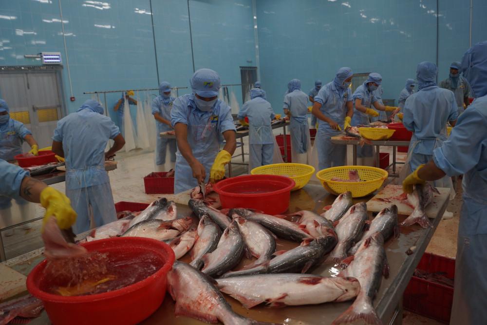 Thuế xuất khẩu cá tra - ba sa của doanh nghiệp được giảm