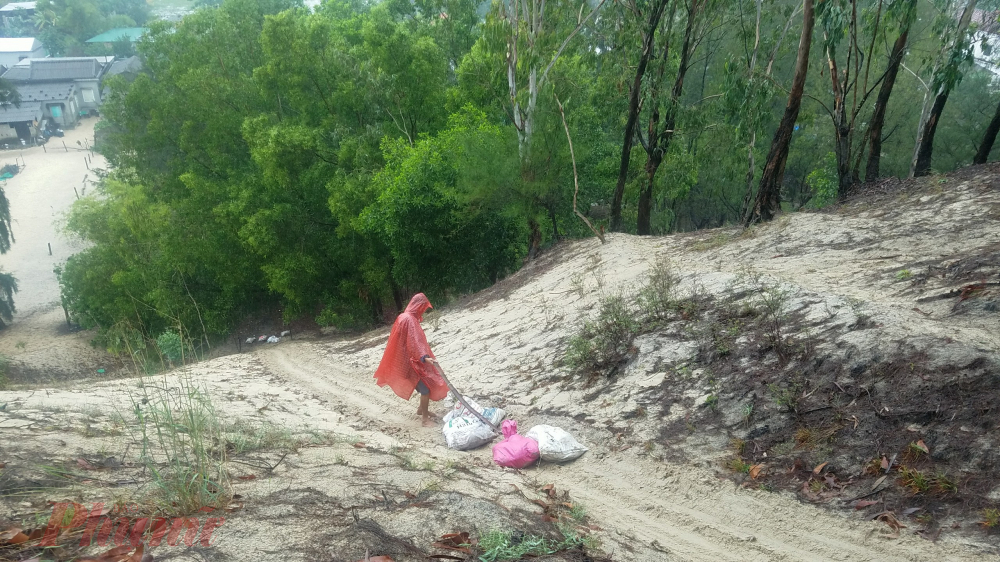 Giữa trời mưa to, người trồng dưa dùng thân những cây dương trên đồi cát đưa dưa vào bao cột kín rồi kéo về nhà