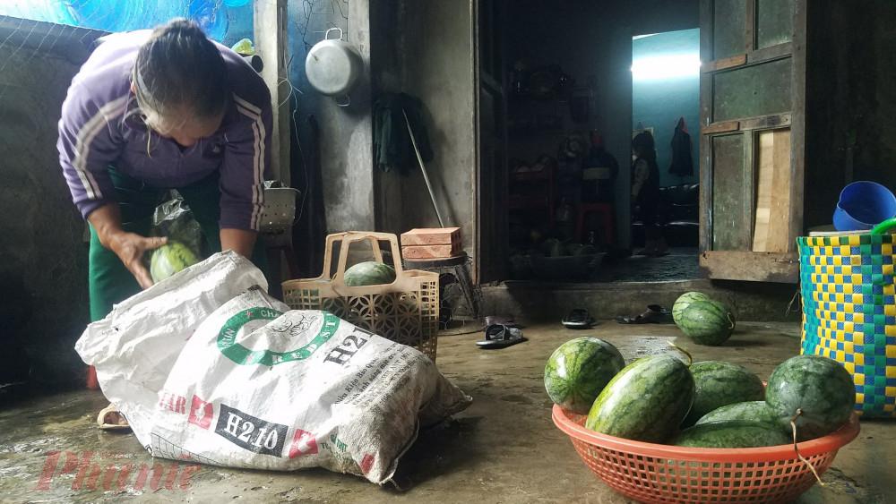 Những quả dưa to đã được chọn lựa đem bán rẻ cho tiểu thương đến thu mua, giá rẻ