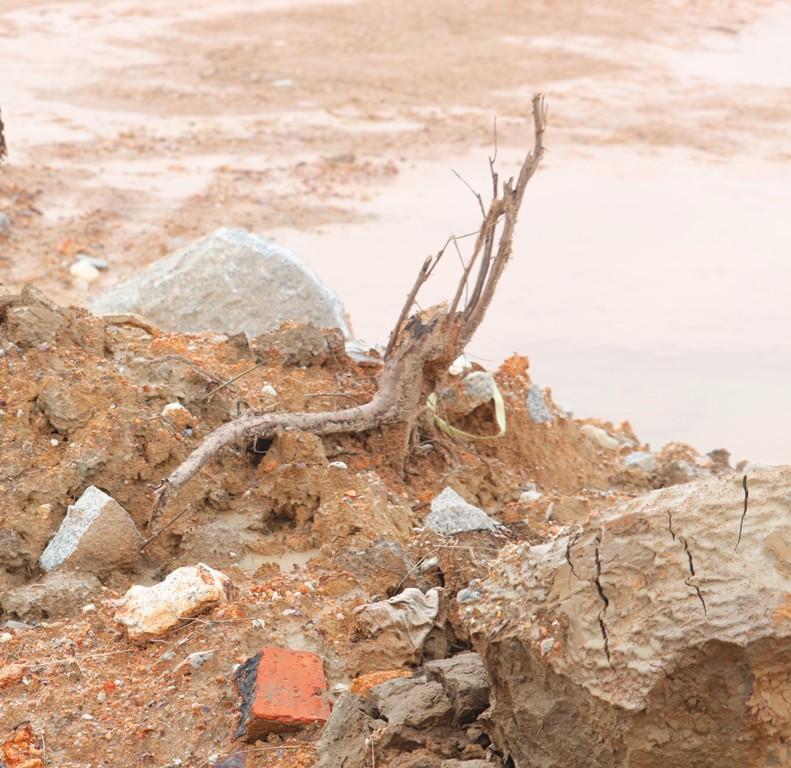 Rất nhiều đá hộc, đất bẩn và rể cây đang được chủ đầu tư cho xe  đổ xuống tại vì trí xây dựng Khu TĐC ở xã Thủy Bằng