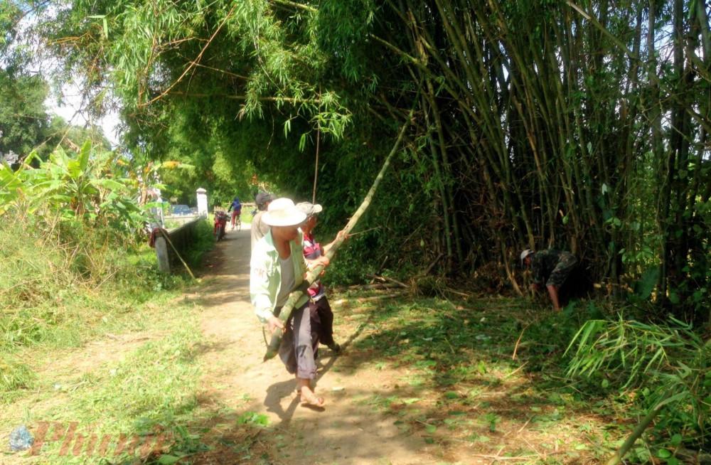 Bắt đầu từ lúc trời sáng bà con trong làng Thanh Lương cùng nhau đi chọn những gốc cây tre  già, chắc nịch để chọn làm cầu