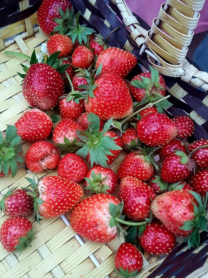 Các trang trại ở Mộc Châu không chuyên canh một loại cây mà trồng khá đa dạng. Ảnh: Hồng Anh.