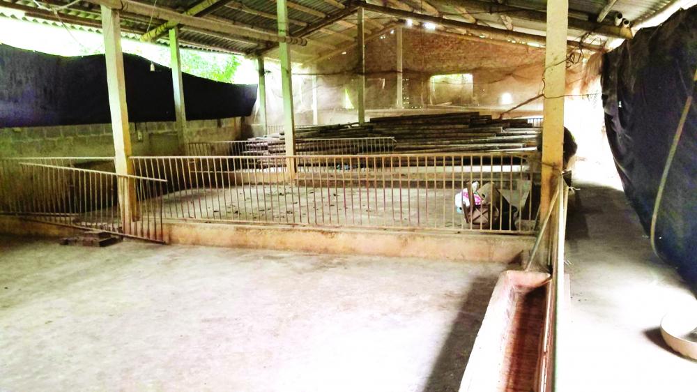 Sau đợt rớt giá kinh hoàng năm 2017 và dịch tả lợn châu Phi năm 2019, hầu hết các hộ chăn nuôi ở xã Ngọc Lũ đã để chuồng không, trại trống