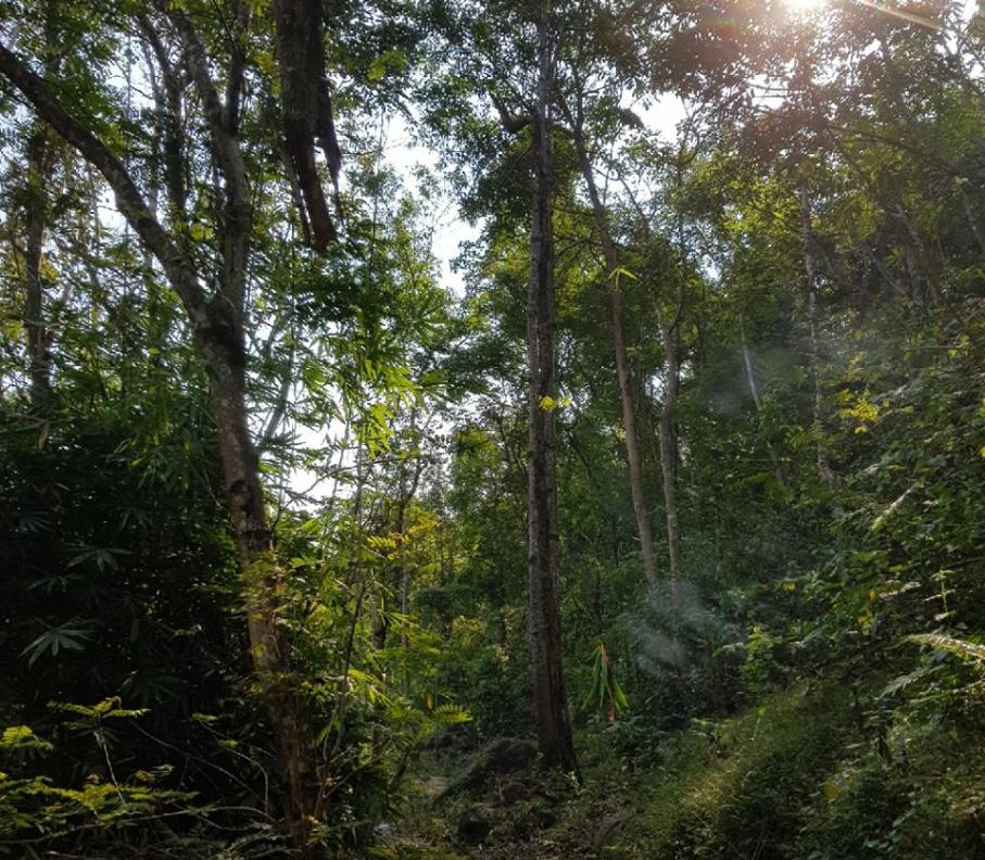 Hệ thức vật ở núi Dinh